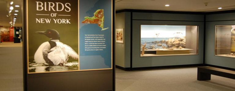 NYS Museum Exhibition: Birds of New York